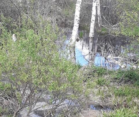 В реке под Тюменью обнаружили экстремальный уровень загрязнения. Рыба и птицы гибнут