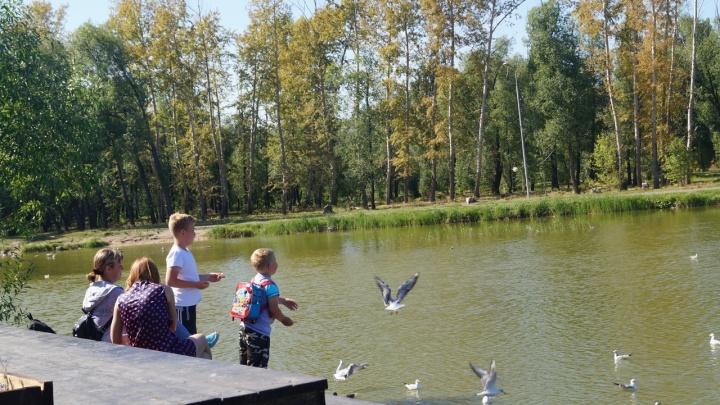 В парке имени 30-летия ВЛКСМ построили деревянную пристань