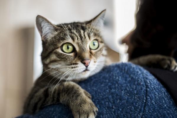 Лучшее место для кота— на руках у любящего хозяина