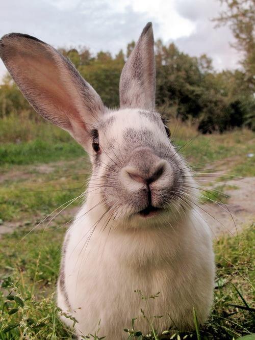 Первого встреченного кролика Александр кормил печеньем