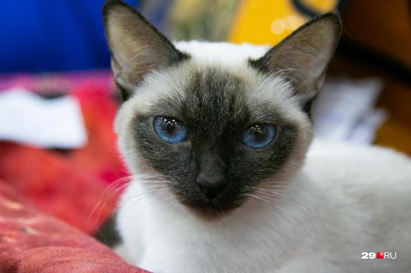 В международной выставке кошек участвовало более сотни кошек