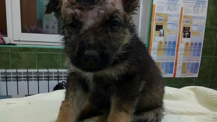 Спортсмены из Башкирии спасли на трассе раненого щенка