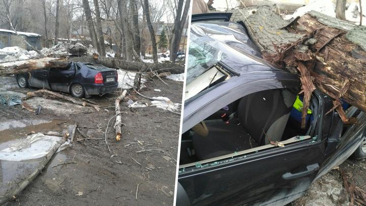 На улице Свободы рухнувшее дерево раздавило «Ладу-Калину»