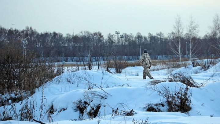 В Омской области появились две стаи волков, которые нападают на скот