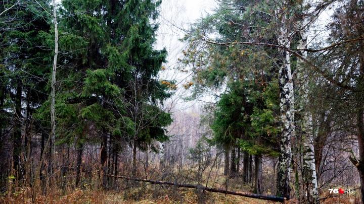 В Ярославской области пенсионера оштрафовали на 240 тысяч за лося