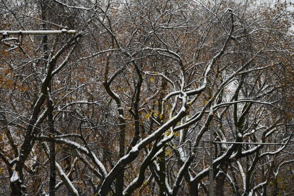 В ближайшее время в Екатеринбурге прольются дожди, после чего придет похолодание