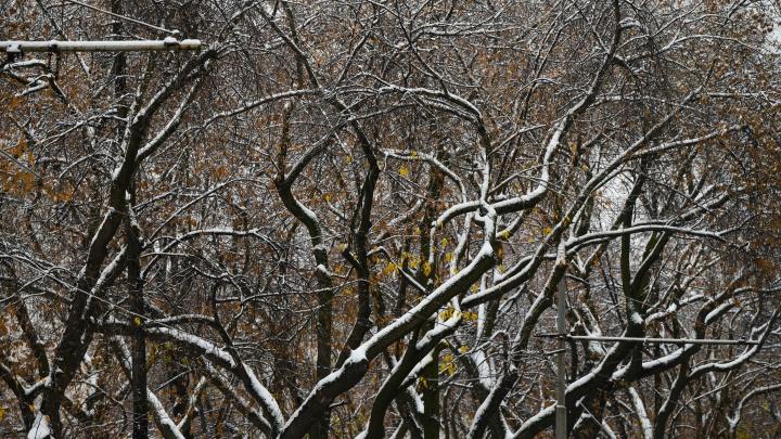 Екатеринбург зальет дождями, а потом заморозит: когда ждать гололеда
