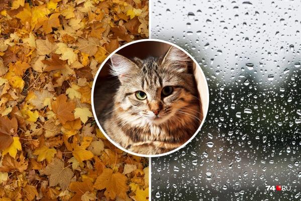 Дожди будут идти в Челябинске минимум до понедельника, 23 сентября