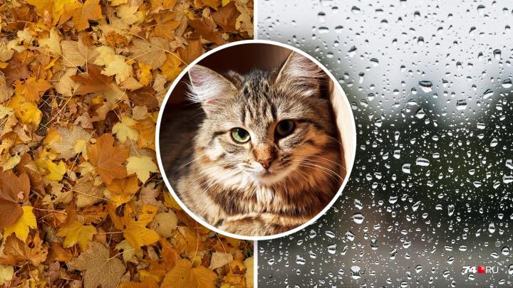 Настроение «осень»: погода в Челябинске до конца недели радовать не будет (показываем на котиках)