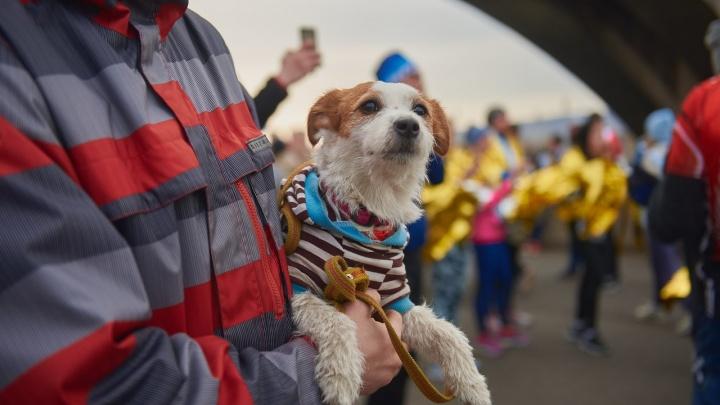 Тысяча красноярцев пришли на благотворительный забег и собрали для детей-сирот полмиллиона рублей