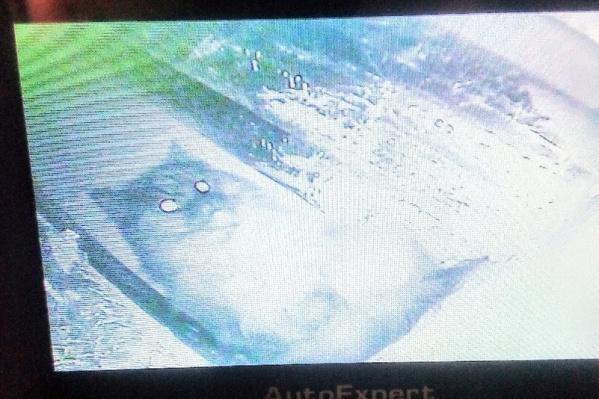 С помощью эндоскопа спасатели быстро определили, что кот был за стеной недалеко от отверстия