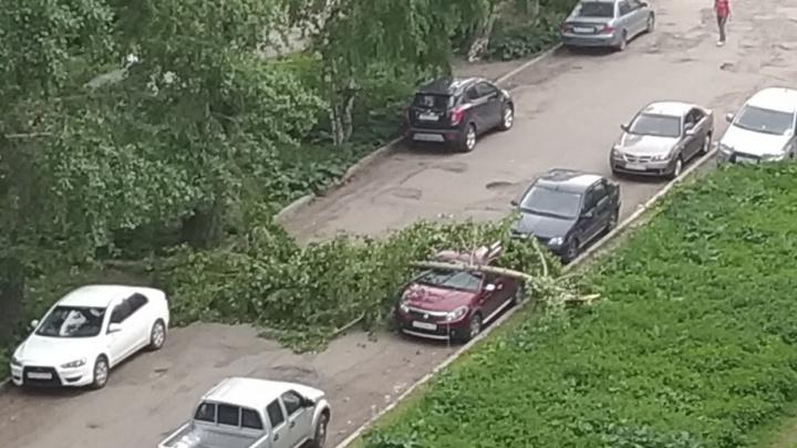 В центре Архангельска на иномарку упал тополь