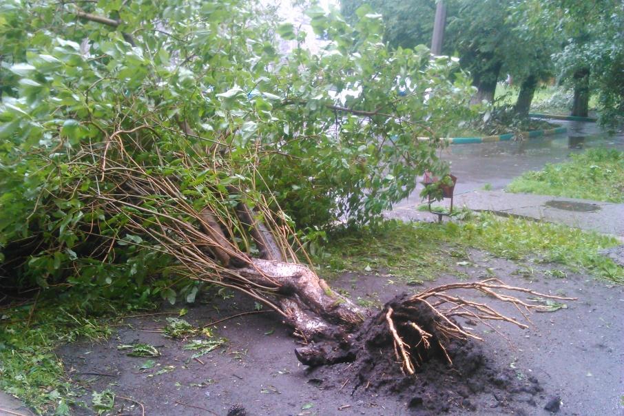 Возможен обрыв линии электропередачи и вал деревьев