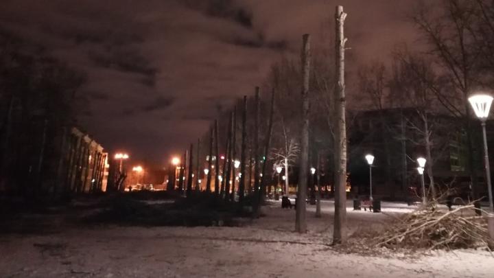 «Спилили деревья наполовину»: аллею тополей на бульваре Культуры превратили в аллею столбов
