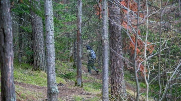 Сборщик ягод потерялся в лесу за сотни километров от Красноярска