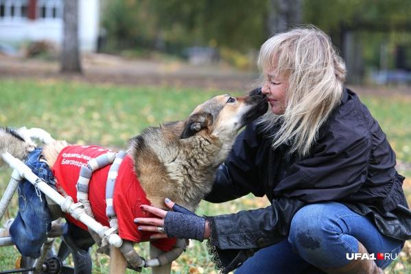 Когда пес сделал первые шаги после травмы, Вероника расплакалась от счастья