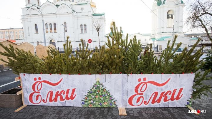 Сосна, ель или датская пихта? Что и почем можно купить на ростовских елочных базарах