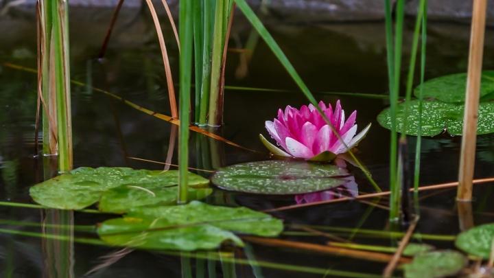 Цветы, стрекозы, птички: любуйтесь свежими летними фотографиями с берегов Волги
