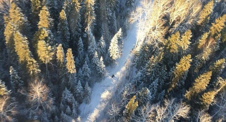 Мальчишек, которые потерялись под Кушвой, заметили, когда кружили над лесом на вертолёте
