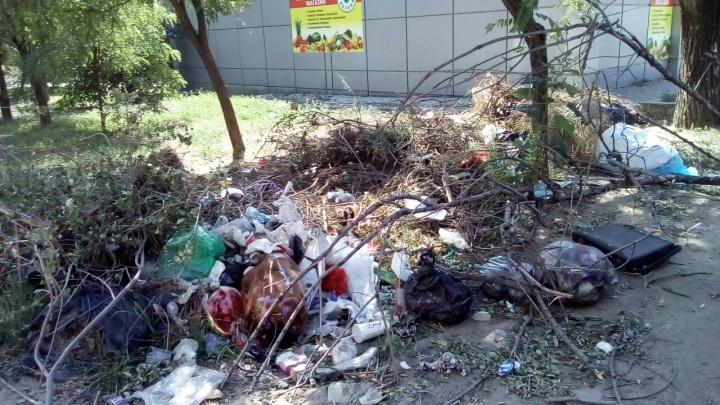 «Одним словом — беспредел»: в парке Волгограда собирают гору из сухих веток и мусора