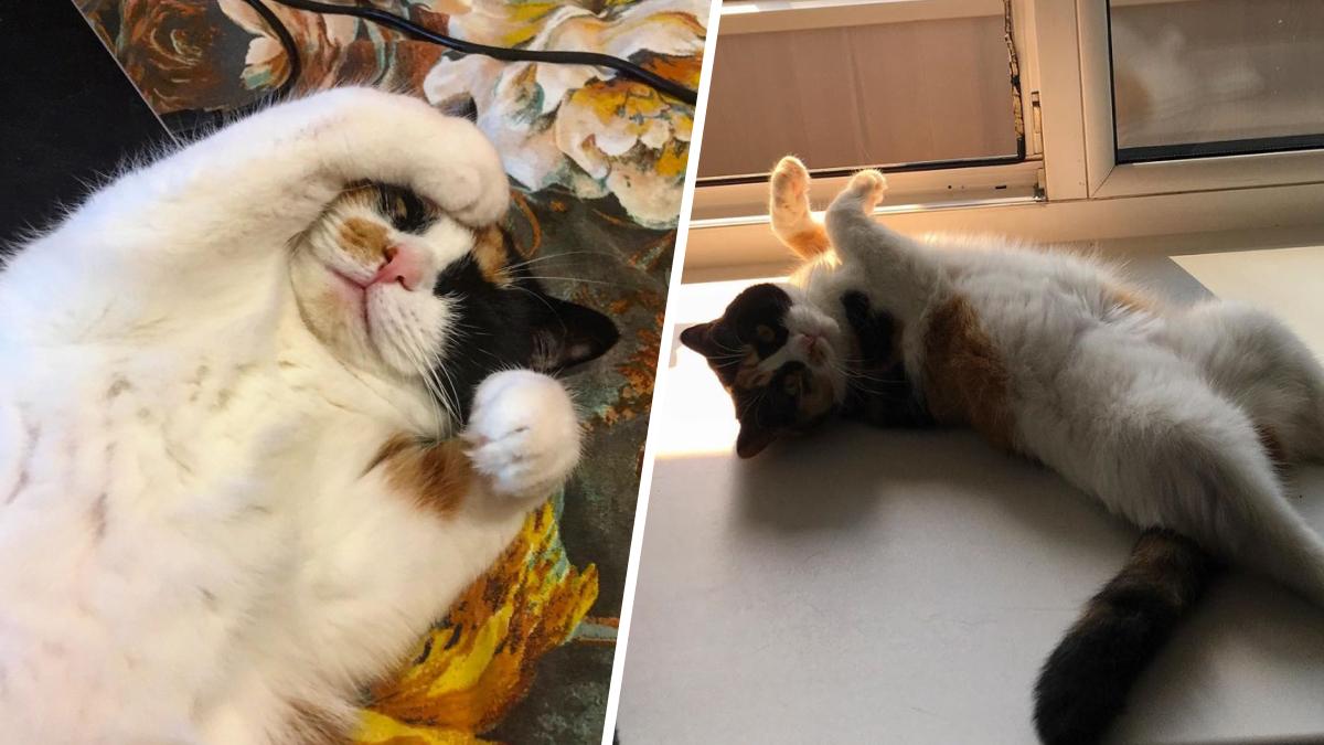 Кошка Зина очень любит позировать