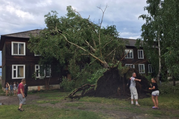 Дерево вырвало с корнями и повалило на дом