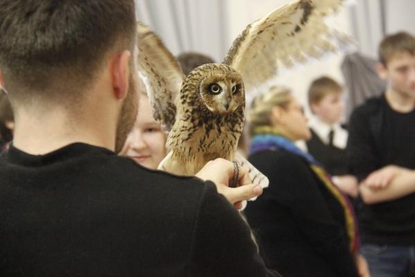 Фестиваль организовал Центр реабилитации диких животных