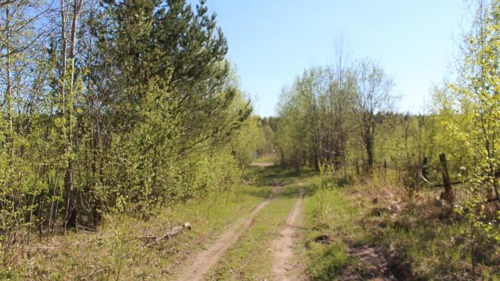 В уходящем году в Поморье восстановили больше леса, чем планировали