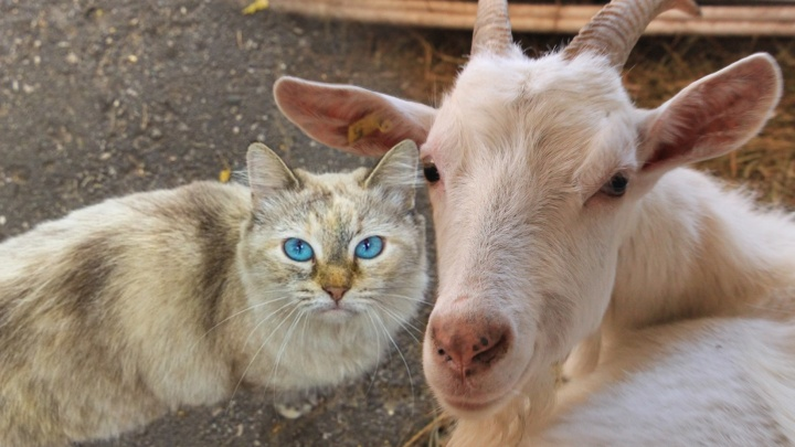 Котик вместо козы: известный блогер Илья Варламов предложил изменить герб Самары