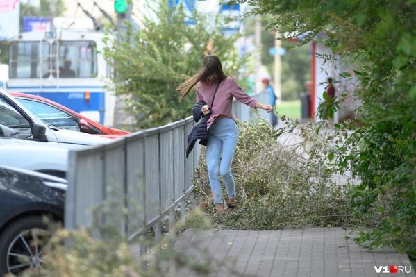 При сильном ветре в Волгограде следует обходить стороной рекламные щиты и особенно деревья
