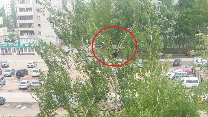 Уфимский котенок погибает на дереве