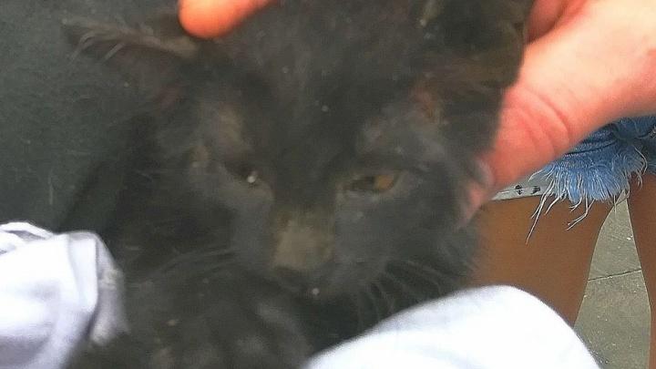 Красноярцы спасли котенка, который застрял между бетонными плитами и несколько дней там просидел