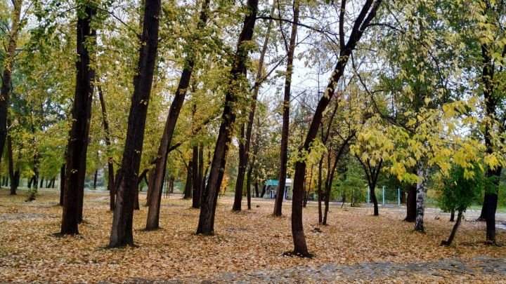 В Кургане последняя неделя сентября будет морозной