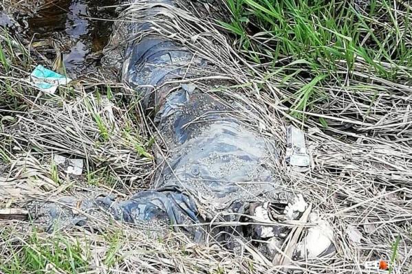 Мумифицированные останки пролежали в лесу не меньше трех месяцев
