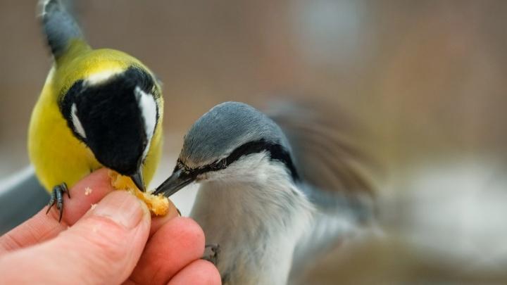 В Дендропарке открылась выставка фотографий, главными героями которых стали птицы и животные