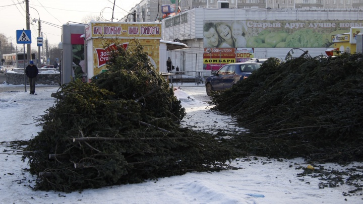 В Новосибирске открылись первые ёлочные базары