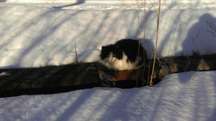 В первую неделю февраля в Омске потеплеет почти до нуля