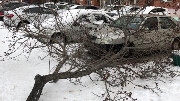 На улице 50 лет Октября незаконно срубили деревья. Администрация подсчитывает ущерб