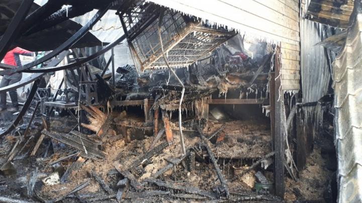 Три десятка собак погибли во время пожара в частном приюте для животных Златоуста