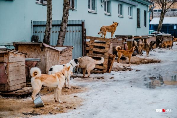 Отловленных с улиц собак везут в приют. Но, с одной стороны, он уже всех не вмещает, а с другой — есть вероятность, что агрессивных животных отлов не забирает