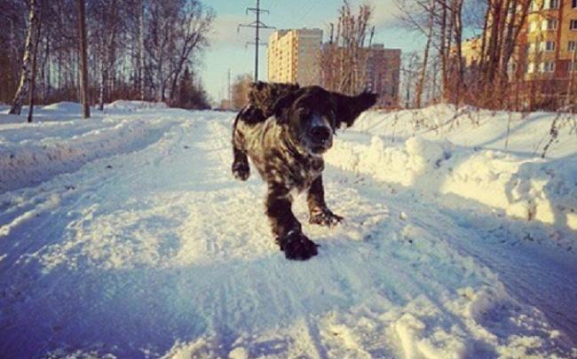 Владимир Слепцов решит собачий вопрос: власти выберут места, где будут гулять животные