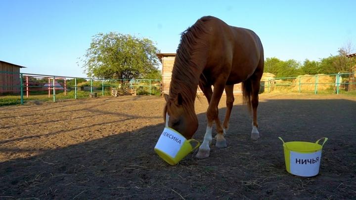 Донской конь-оракул предугадал победу сборной Мексики