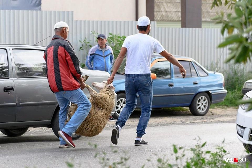 Жертвоприношения в Волгограде делают на фермах за городом — видимо, чтобы не шокировать других горожан