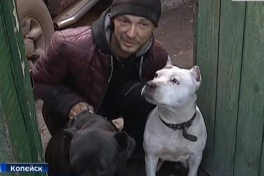 Хозяин псов не считает себя виновным и не извинился перед пострадавшим мальчиком