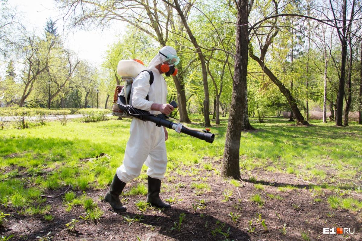 Охота на клещей: смотрим, какие парки и скверы Екатеринбурга уже зачистили от кровососов