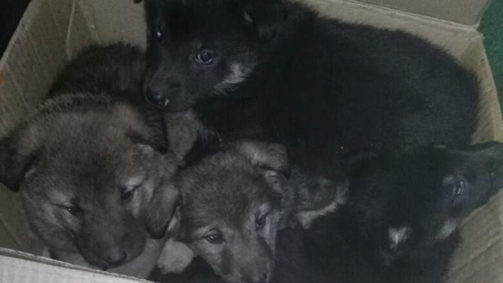Взрослых собак жестоко убили, а щенков замуровали: за информацию о живодёрах объявили награду