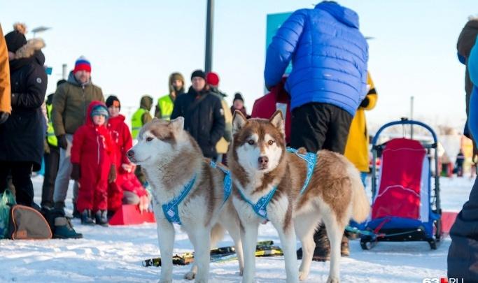 Милота в нацпарке: на территории «Самарской Луки» пройдет международная гонка на собачьих упряжках