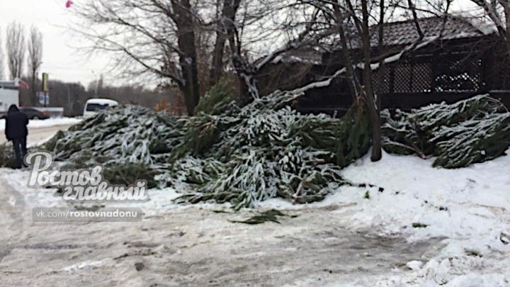 Лесные красавицы больше не нужны: в Ростове непроданные ёлки выбросили прямо на улице