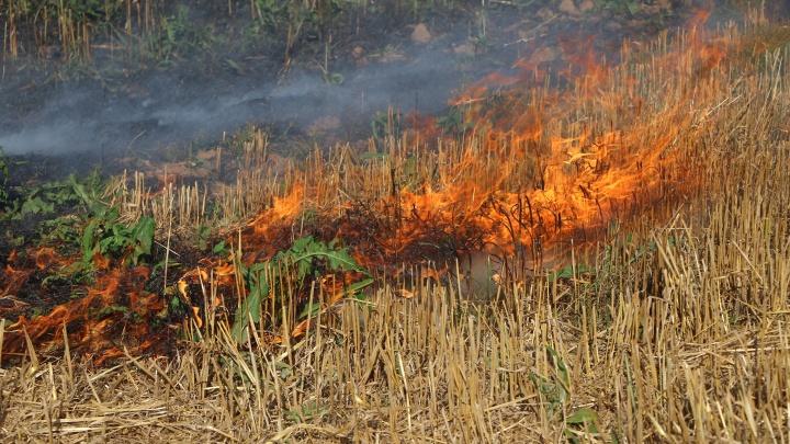 «Людей жалко! Считай, бомжи!»: 7 домов сгорели в деревне Елховка из-за пала травы