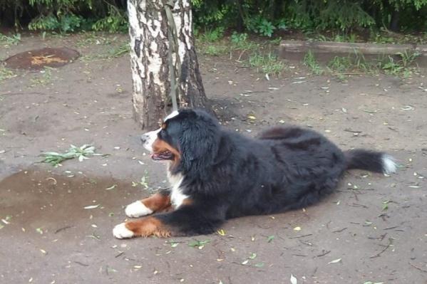 Жители Красноярска оставляют по 150 жалоб на бродячих собак в день